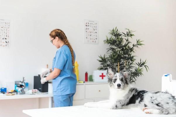 Curso de medicina veterinária no Rio de Janeiro