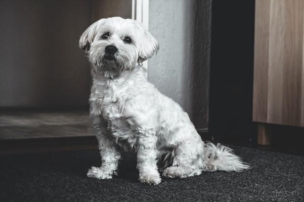 curse medicina veterinaria e cuide de pets