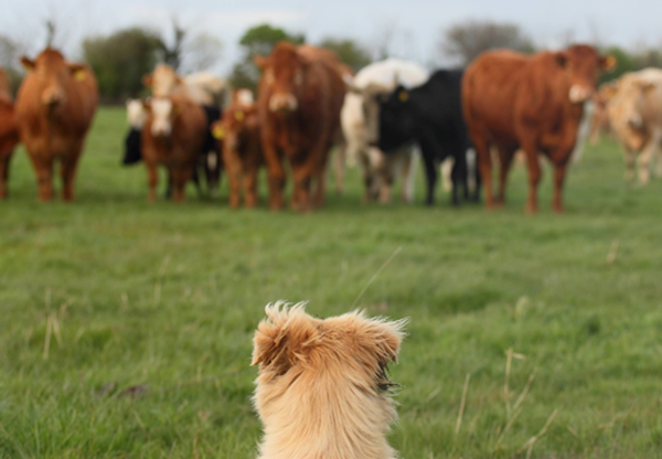 Diferença entre medicina veterinaria e zootecnia
